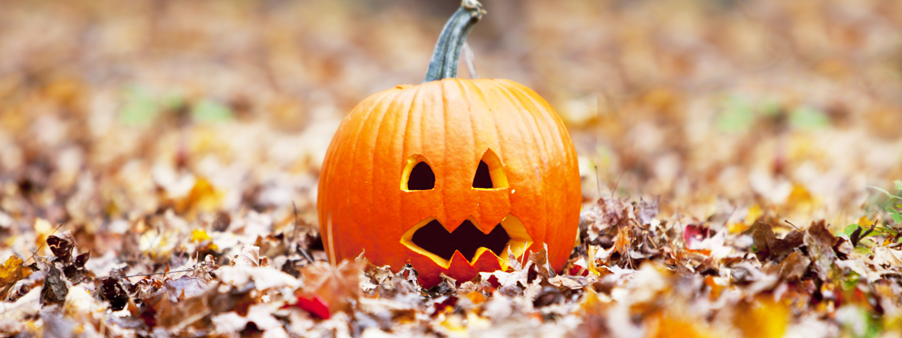 Rainclouds and carved pumpkins – Where is the driest place in the England and Wales in Halloween?
